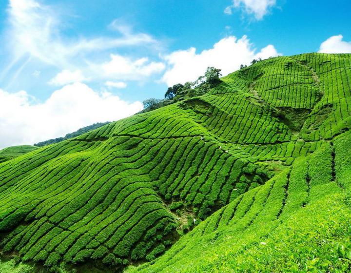 Cameron Highlands Escape Malaysia